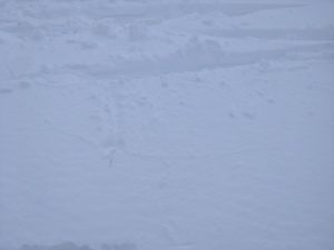 Limited cracks within the bounds of my skis on wind loaded test slope near the bottom of golden gates