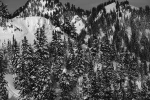 Small crowns among trees along north slopes of Snow Lake Divide. Image licensed CC-BY-NC-SA.