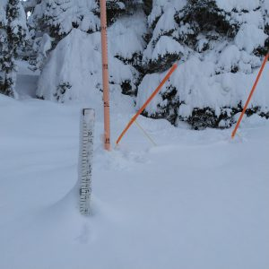 Snow keeps piling up at the Maggies Stake.