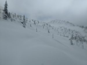Small dry point releases above 4900 ft in dry new snow.