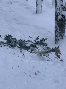 One of many large branches that fell with tree bombs today.
