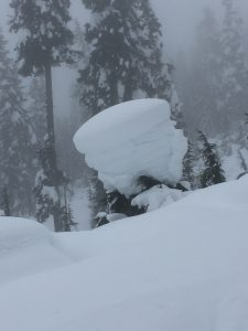 A visual of the whole snowpack at 3900 ft at snoqualmie pass