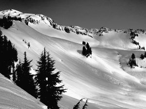 Large avalanche in the Edith Creek area.