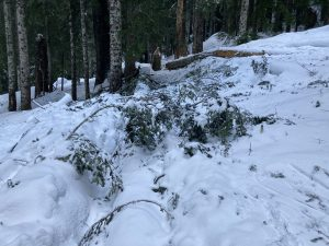 A mix of small branches and larger trees came down with the recent wind event, adding more challenge to BTL travel