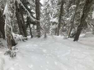 Variable conditions in thick trees with icy tree bomb chunks under a few inches of fresh snow.