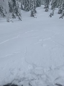 Photo of the small sz 1 wind slab initiated via ski cutting.