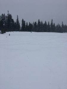 Small windrifts found in areas of sparse trees around 4000' on the SSW aspect of Mount Hood