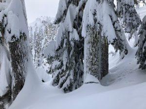 Rapid settlement of the recent storm snow (settlement cone)