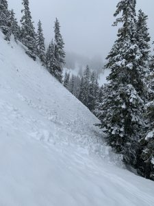 Lots of old avalanche debris like this was found in steep open areas above 4000'.