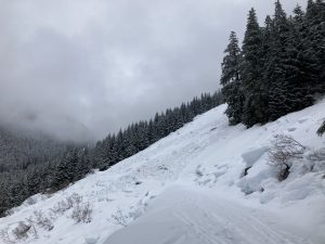 A very large glide avalanche ran late last week and hit NF-1540 approximately .25 miles away from the Hidden Lake Lookout Trailhead.