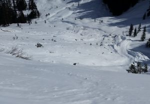 Avalanche debris in Henry Creek from late February containing many trees.