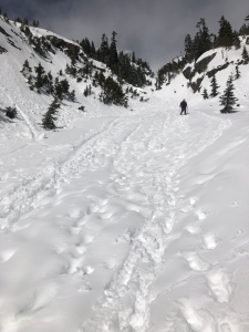 The last (third) section of avalanche chute later on in the morning (10:54)