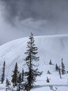 Large group of rollerballs, bordering on a small wet/loose avalanche believed to have been triggered by a skier on the east side of a small ridge right at the tree line