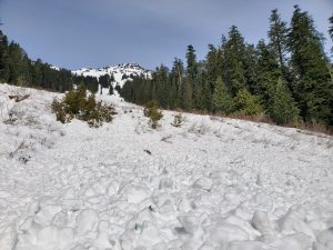 Recent (< 1 week) slide debris fills the entirety of the bottom of the 400+ feet wide slide path which drops down the East Face of McClellan Butte from the summit. This particular slide crossed Alice Creek and climbed at least 20-30 vertical feet up the far side.