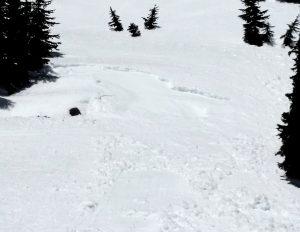 A small skier triggered wet slab. SE, 5050ft