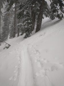 Multiple small Dry Loose avalanches naturaled and ran over the trail up Commonwealth which is popular with skiers and snowshoers