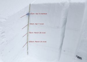 A profile on NE, 5,550ft. The snowpack was mostly dry and crusts from the past month were thin.