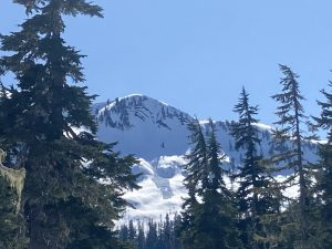 Large natural glide avalanche at 5200ft on the NE aspect of Loomis Mountain that ran today sometime between 10am-2pm